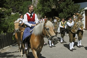 haflinger-horses-tradition-south-tyrol-avelengo