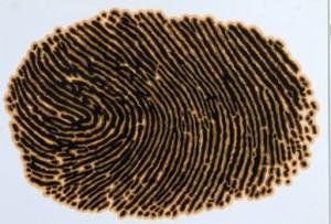 fingerprint of olive oil maker (2)