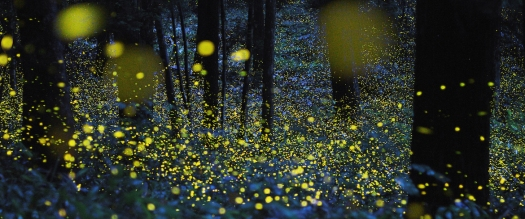 fireflies in italy